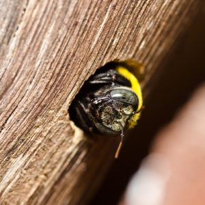 Fewer bees could be bad news for  food sustainability and the culinary community