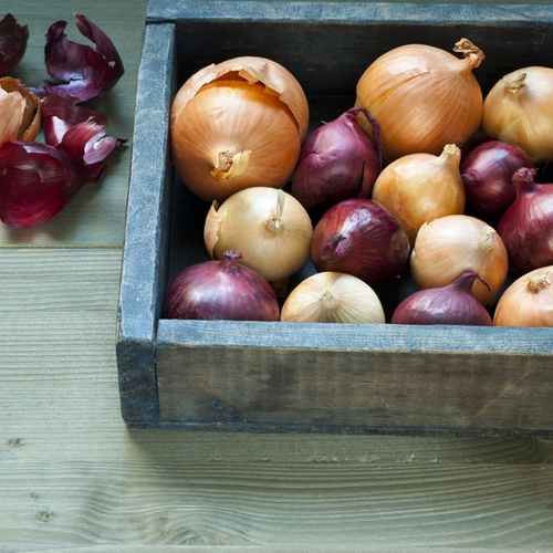 Colorado is the fourth biggest producer of onions by volume in the U.S. Farmers here grow red, white and yellow varieties.