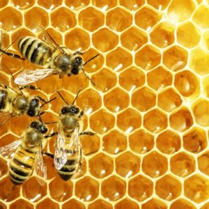 Bees are losing their habitat and dying in great numbers due to changes in the way people mass produce agriculture.